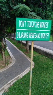 Don't touch the monkey!